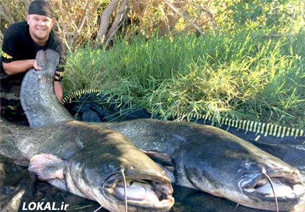 شکار 2 گربه ماهي عظيم الجثه در اسپانيا در سایت لوکال