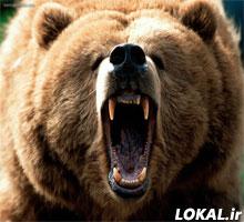 یک زن عشایر مورد حمله خرس قرار گرفت 18+